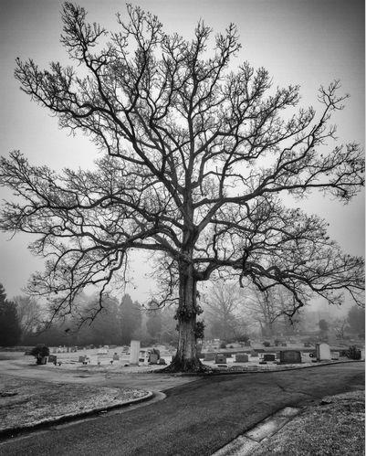 oakwoodcemetery